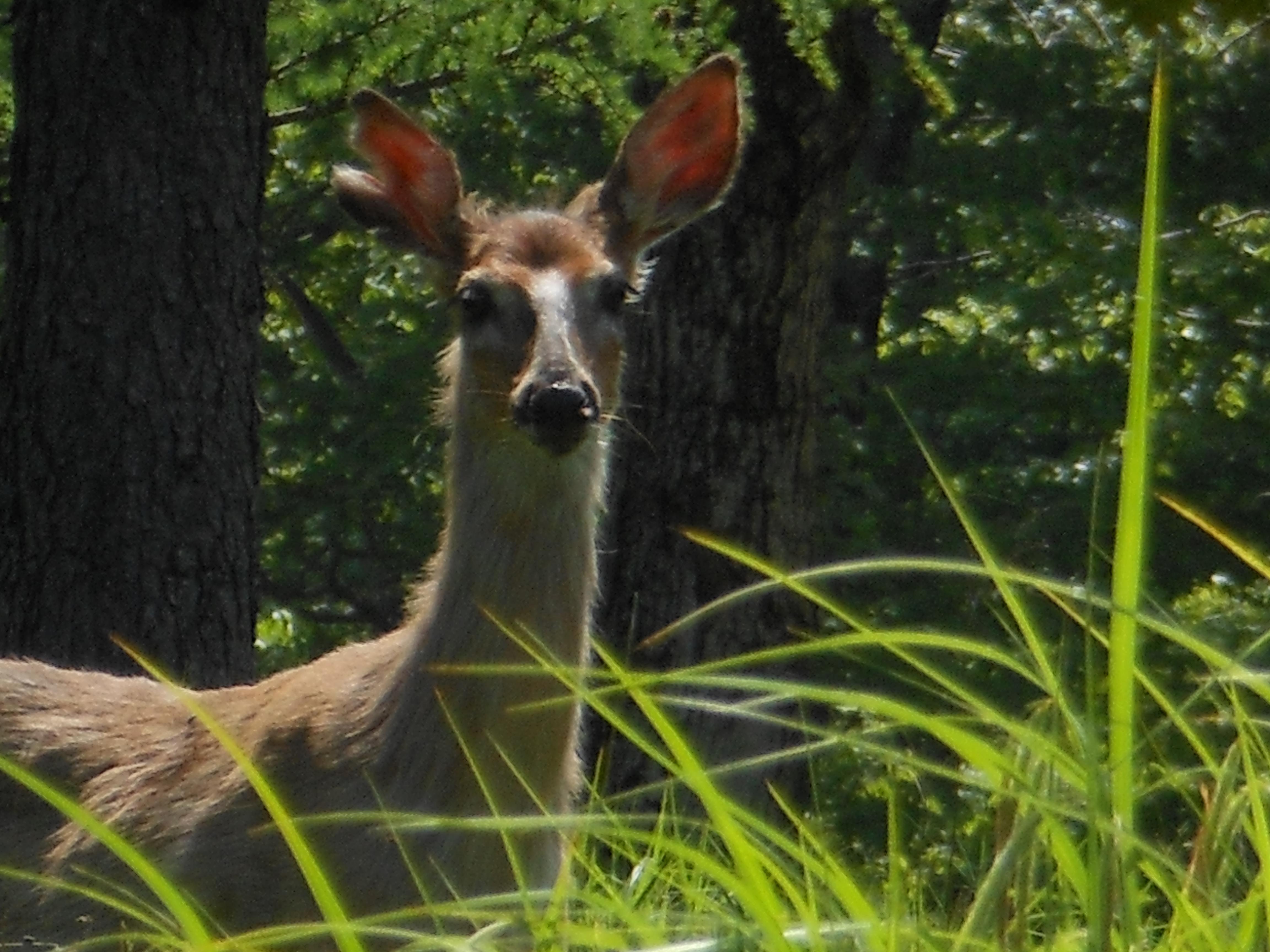 Curious inhabitant